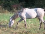Silver Sierras Horse Aug  29 2012 008